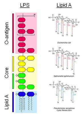 how to understand micro gram &miggagram