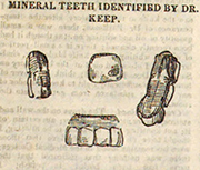 Sketch of mineral teeth of Dr. Parkman identified by Dr. Nathan C. Keep