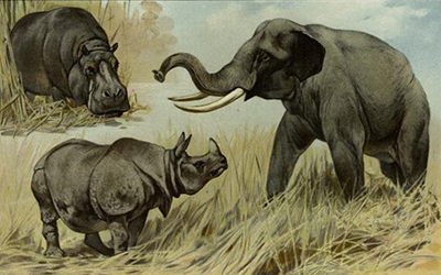 Drawing of a Hippo, elephant, and rhino