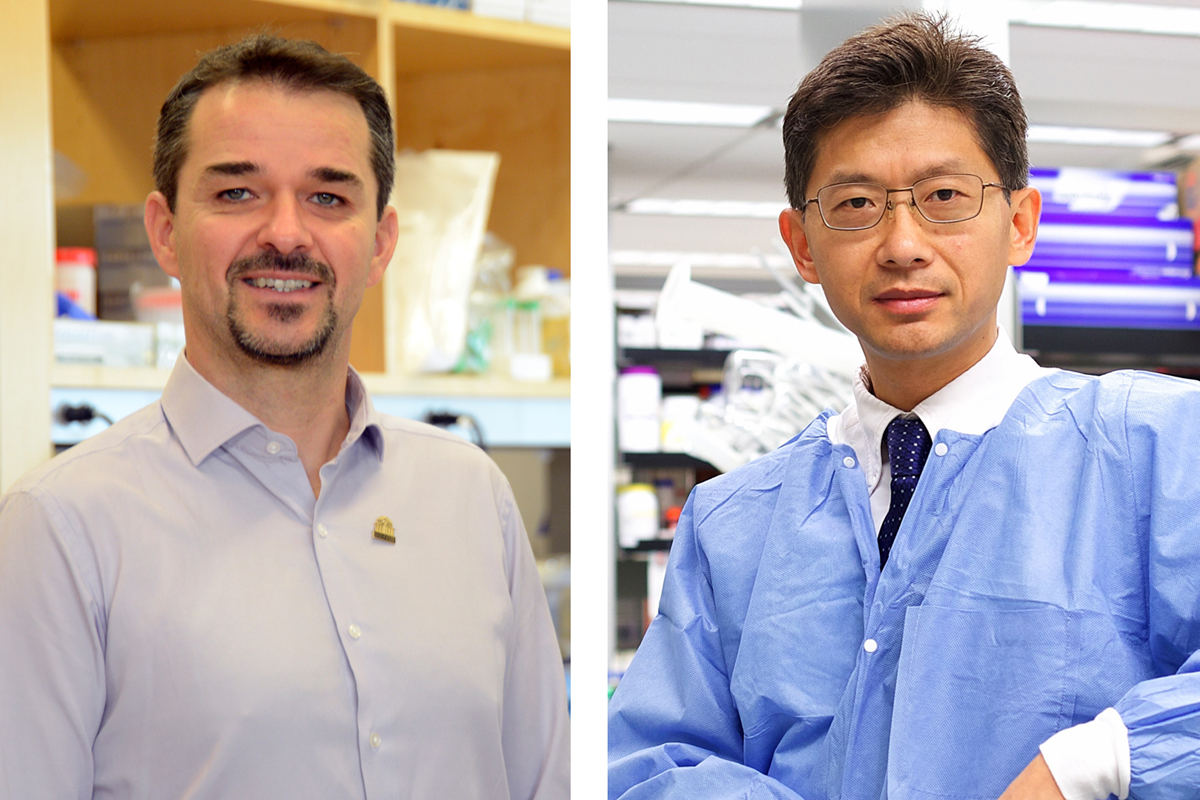 Jacques Ravel, PhD, associate director, Institute for Genome Sciences at the School of Medicine; left, and Hanping Feng, PhD, professor in the Department of Microbial Pathogenesis at the University of Maryland School of Dentistry.